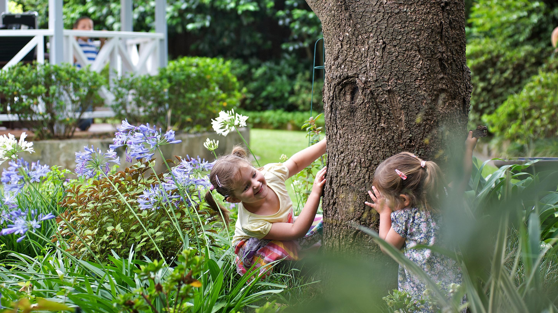 فتيات صغيرات يلعبن لعبة الغمّيضة حول جذع شجرة كبير